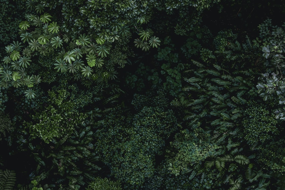 bird's eye view of green plants