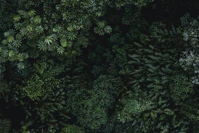 1622. Növények világa
