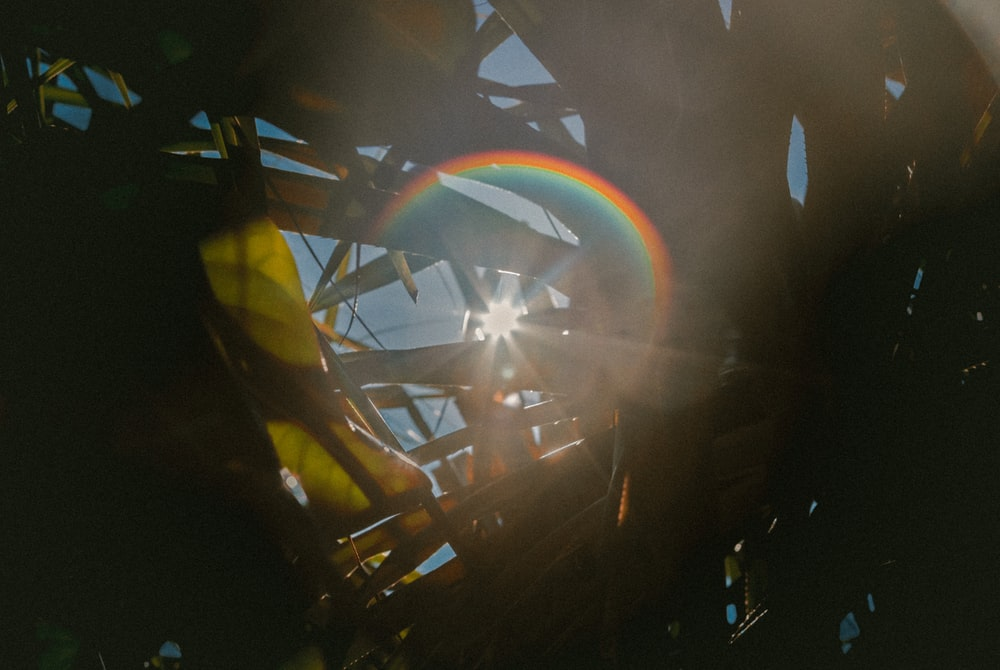 Rainbow sunflare shines through blades of grass and plant leaves