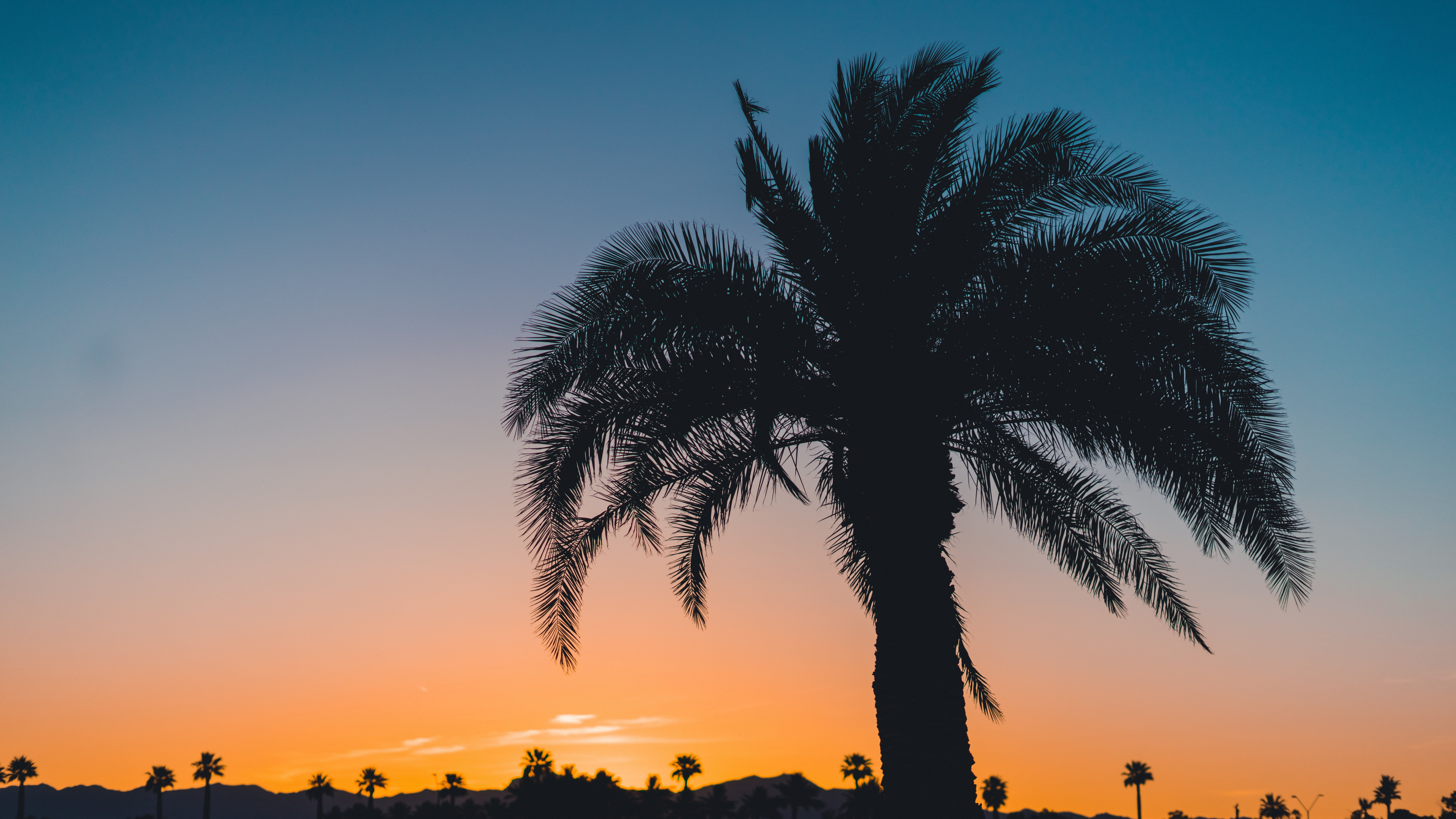 A silhouette of a large palm tree, with others in the distance, at sunset of Goodyear