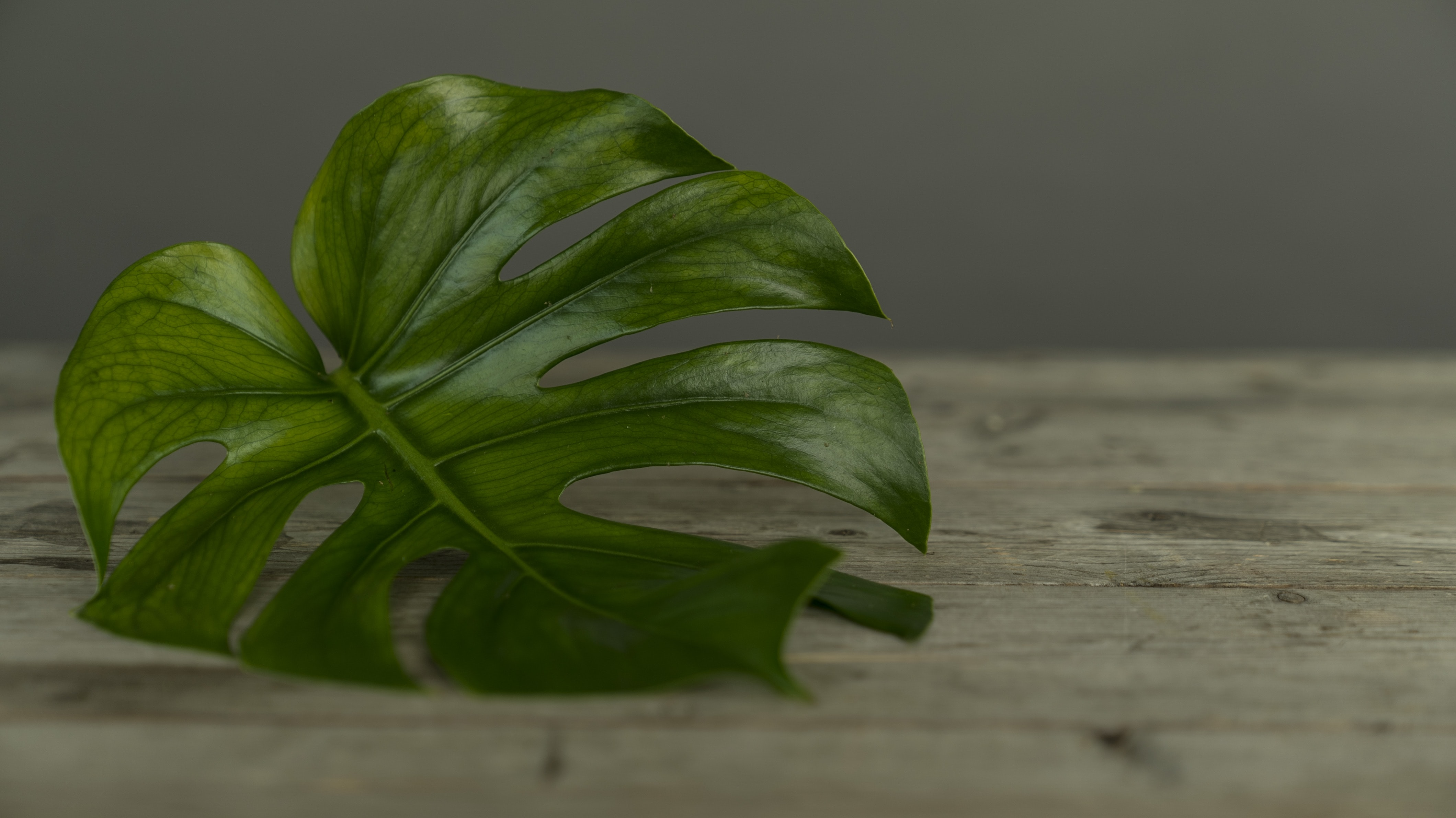 green leaf on brown surface