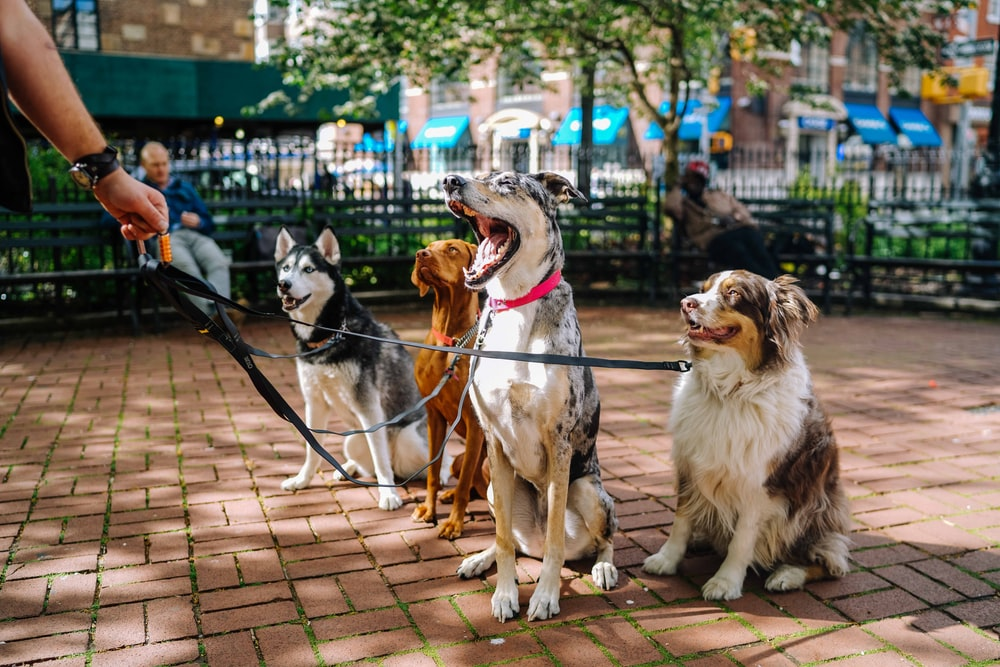 four dogs on park