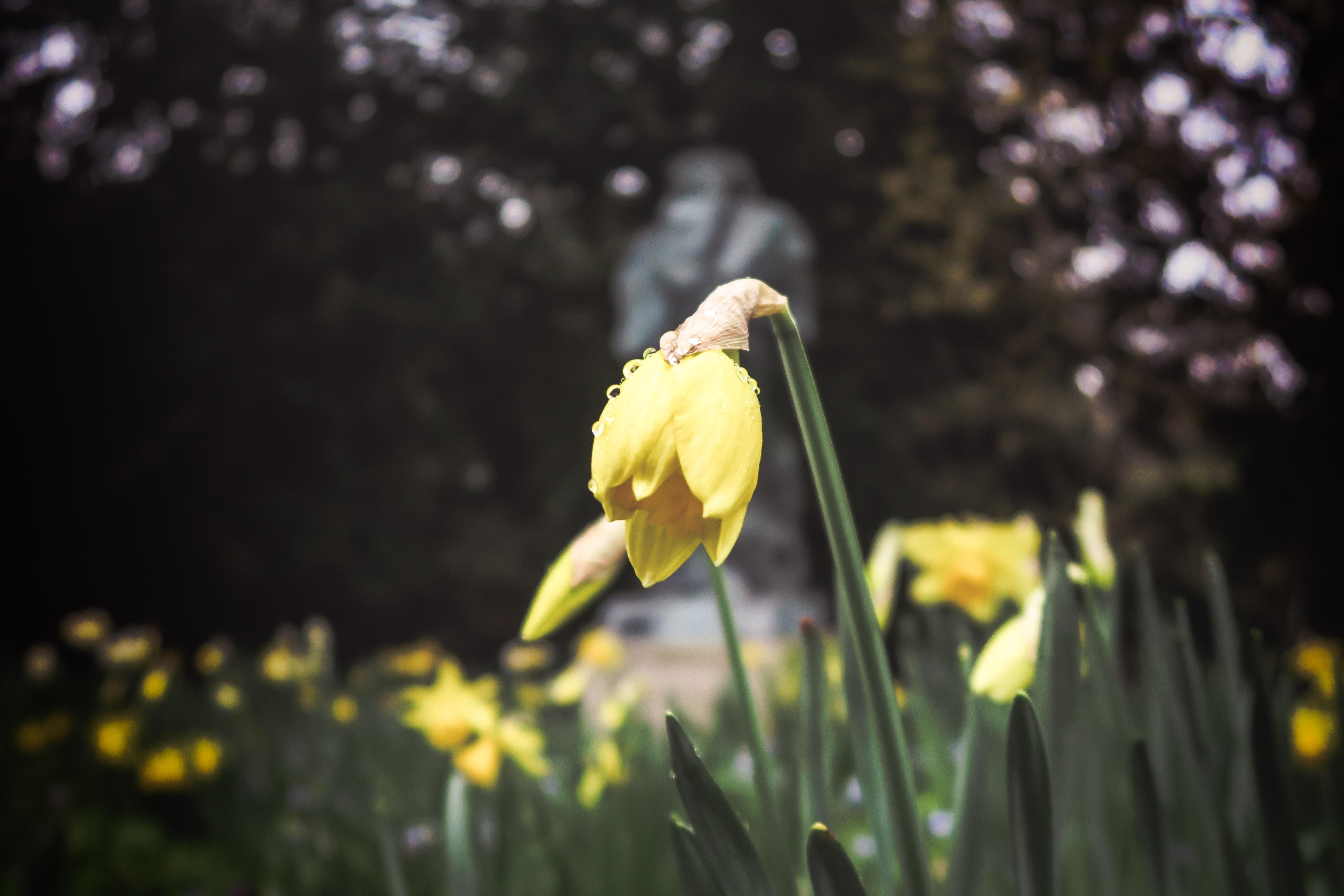 yellow flower focus photography
