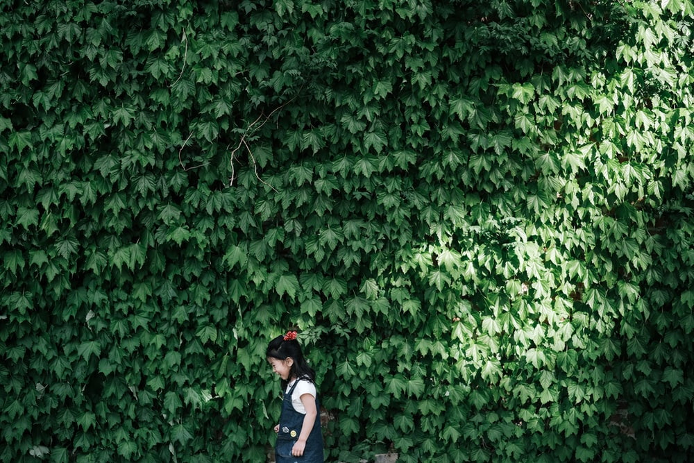 girl standing near wall covered with leafed plants during daytime