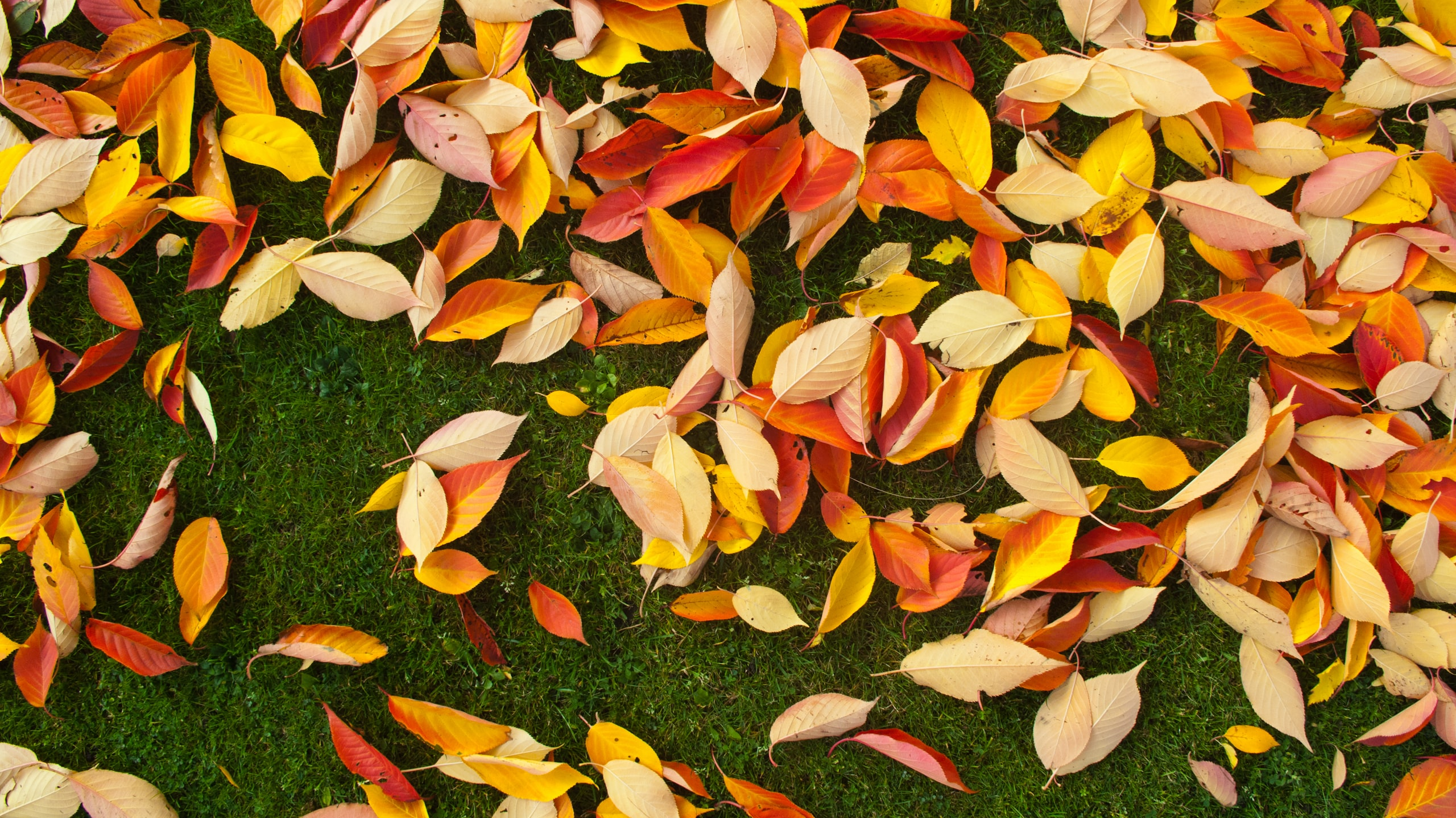 dried leaves on grass
