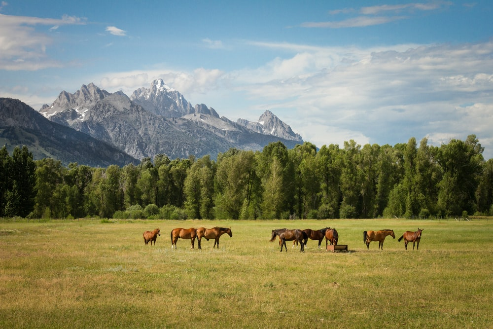group of horses standing on field