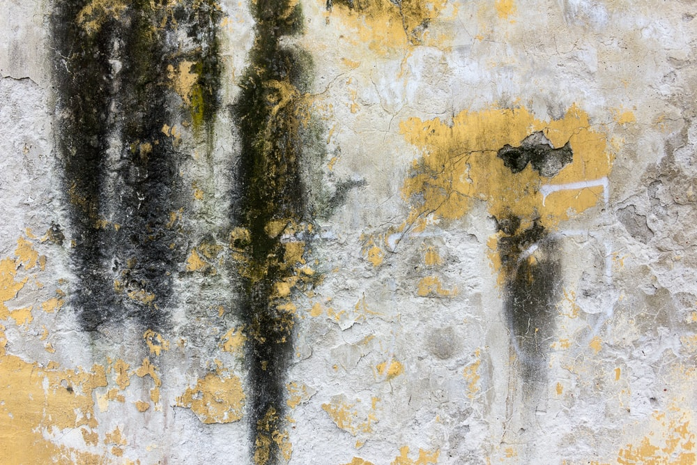 closeup photo of yellow and black concrete wall