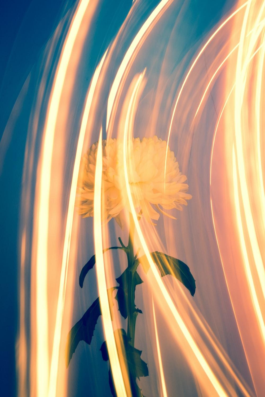 timelapse photo of orange petal flower