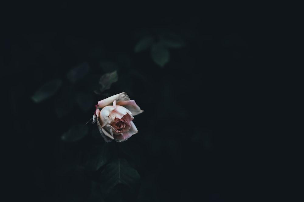 macro shot of pink flower
