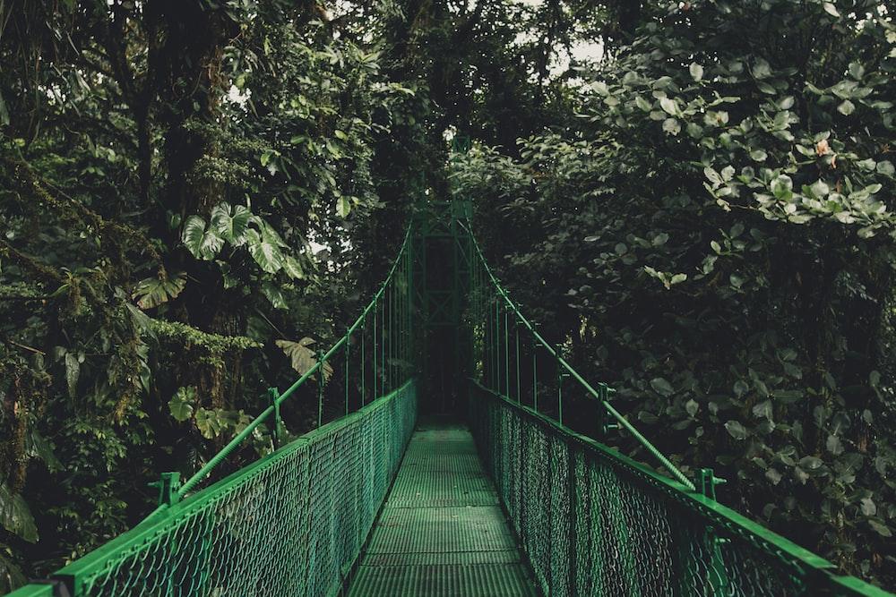 green bridge near trees