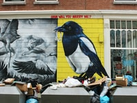 black and white bird graffiti wall surrounded by trash