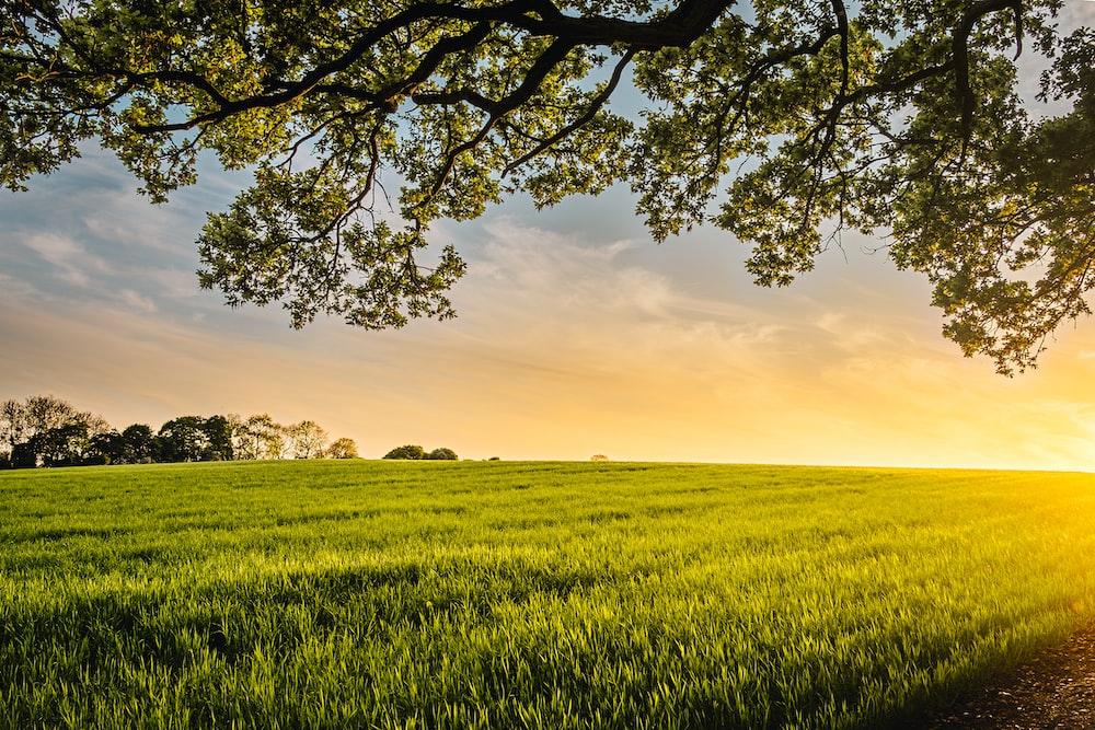 landscape photography of field
