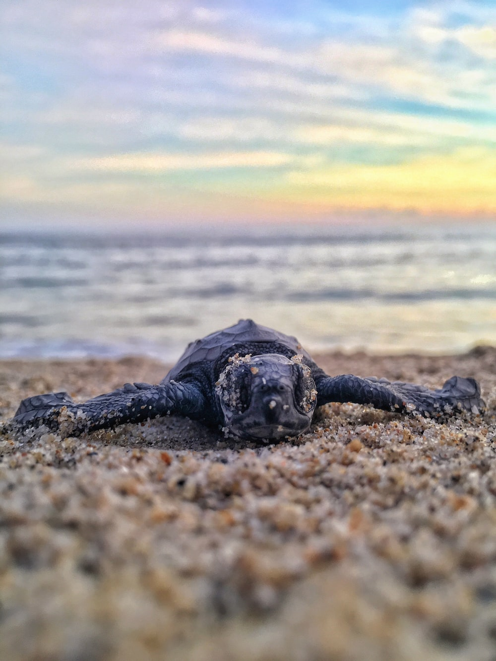 black turtle on seashore