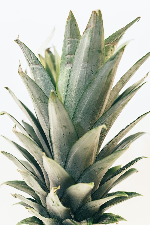 green pineapple leaf