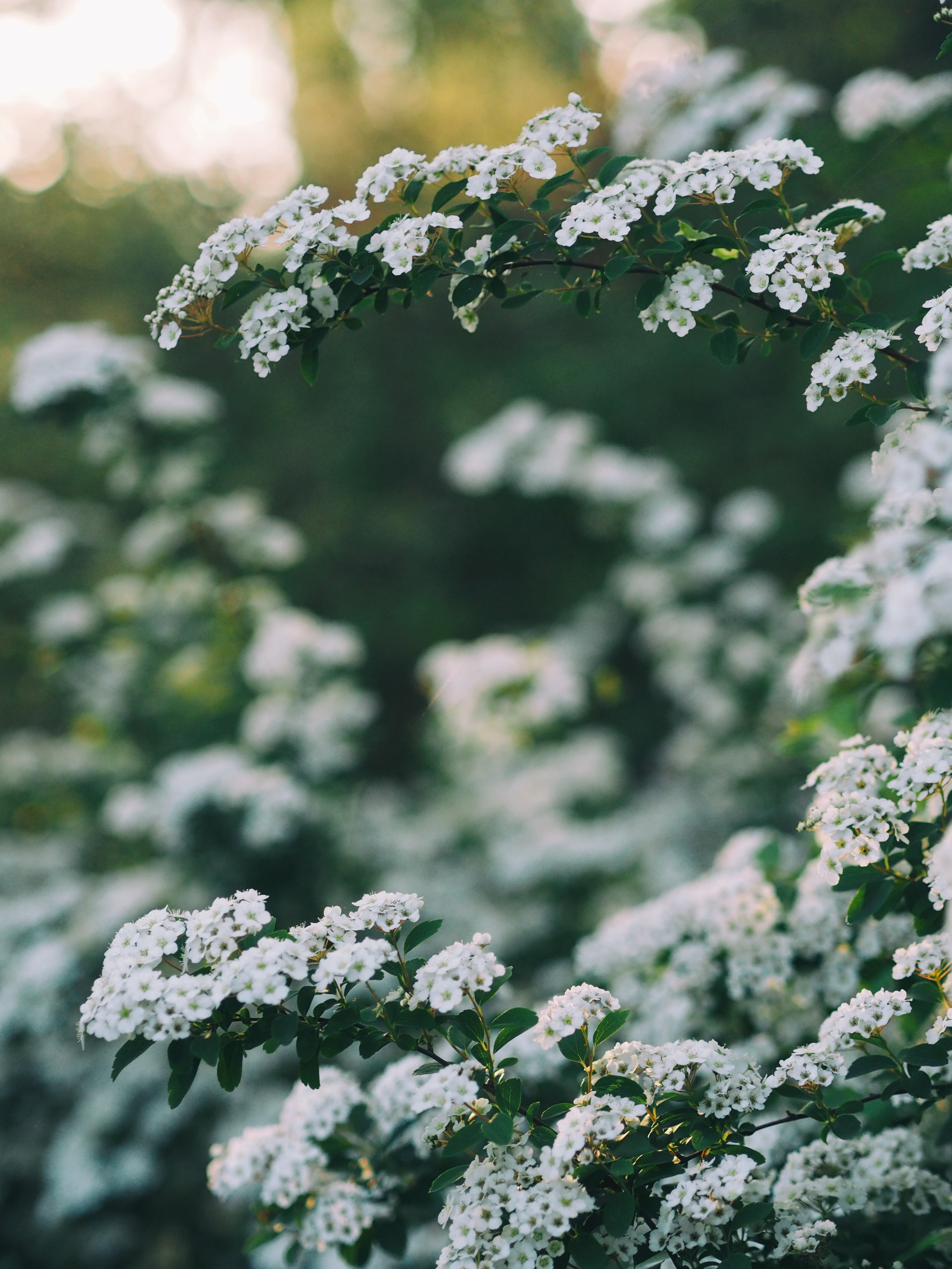 photo of white flowers during day time