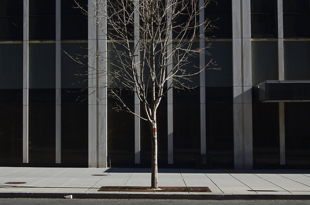 alone bare tree planted on sidewalk