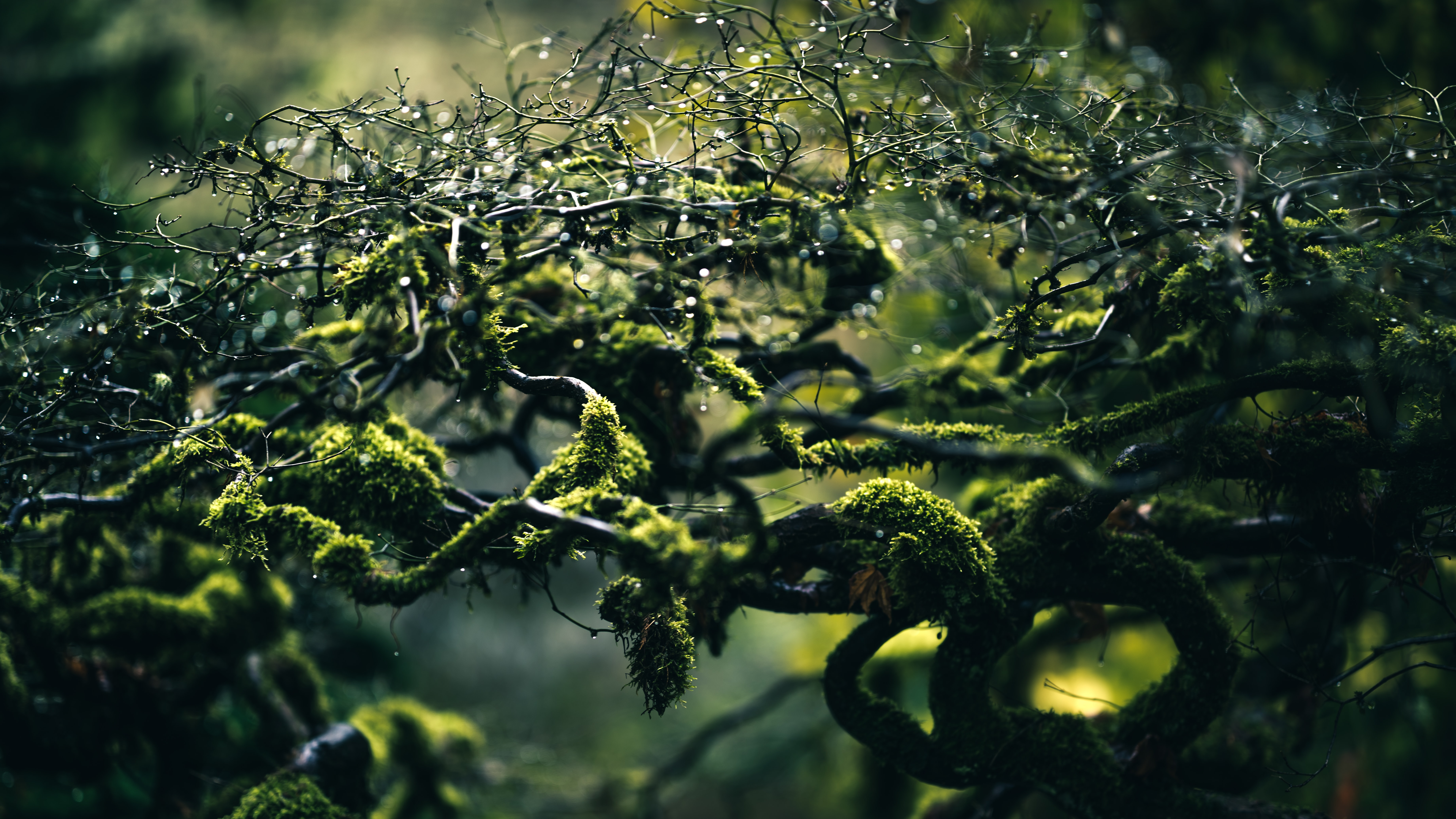 selective focus photo of moss on plant branches
