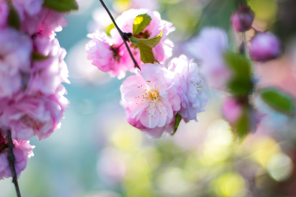 flower bloom pictures download free images on unsplash