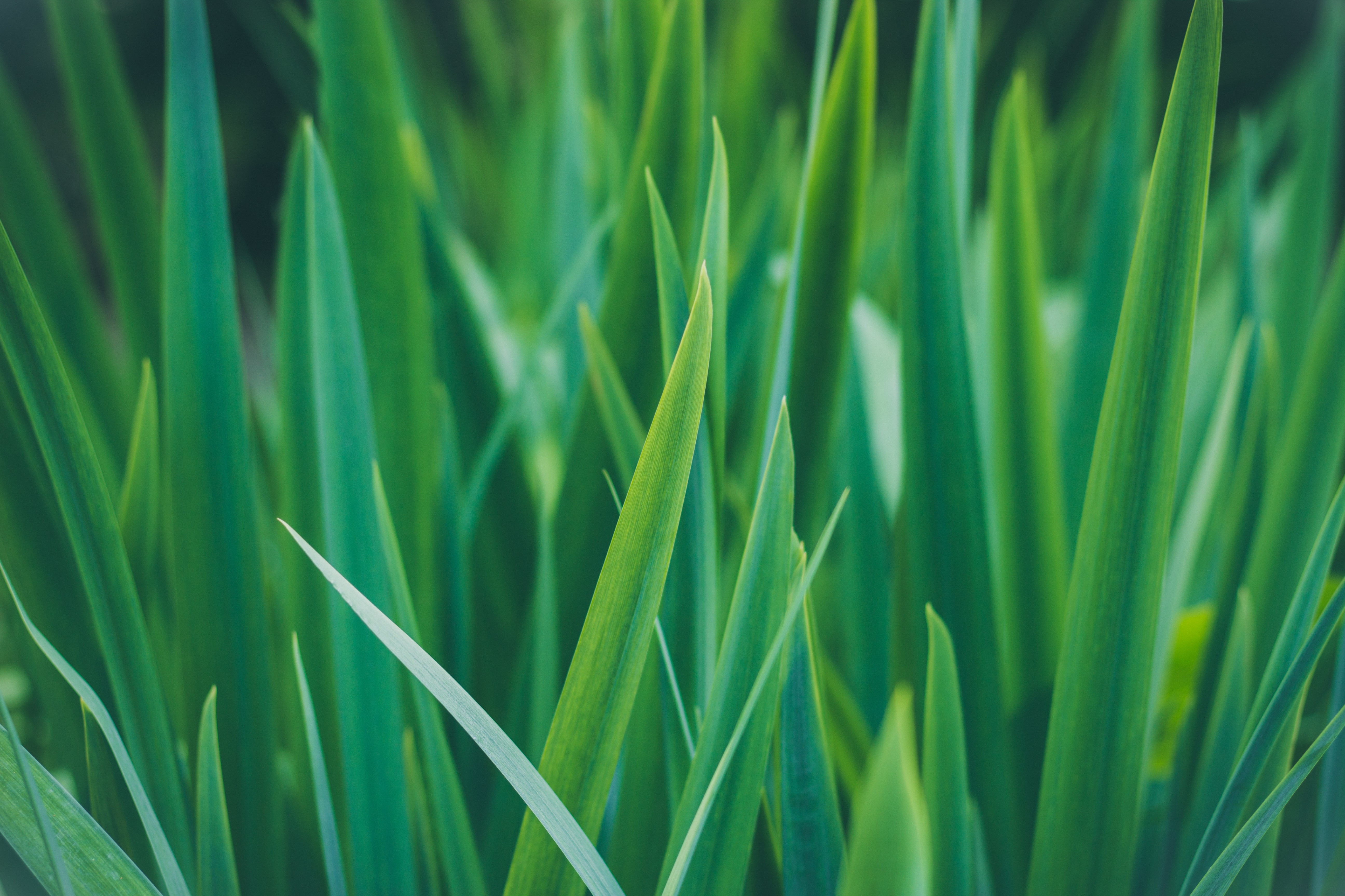 closeup photo of sword-shaped green leafed plant