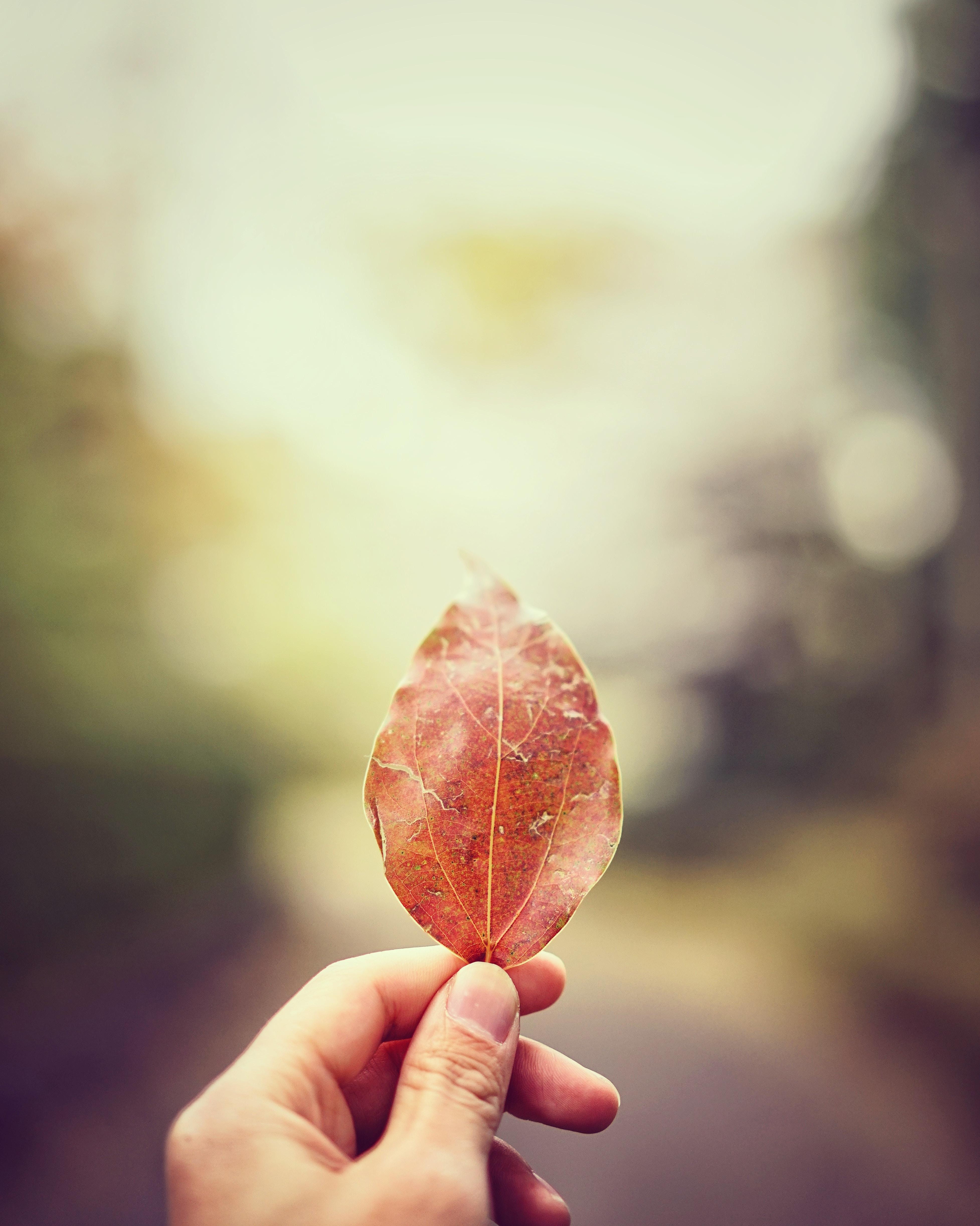 tilt shift lens photo of person holding dried leaf