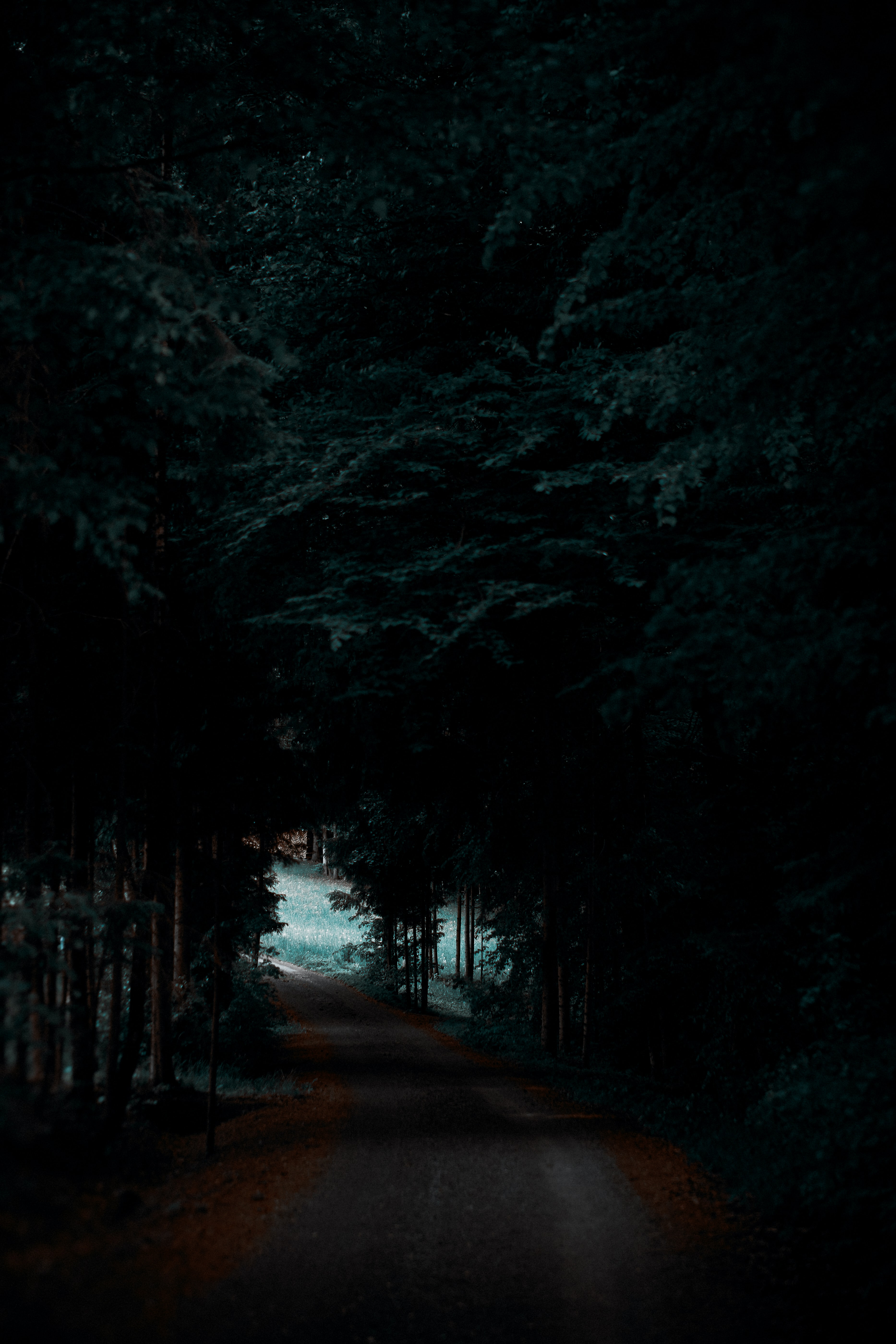 gray road between forest