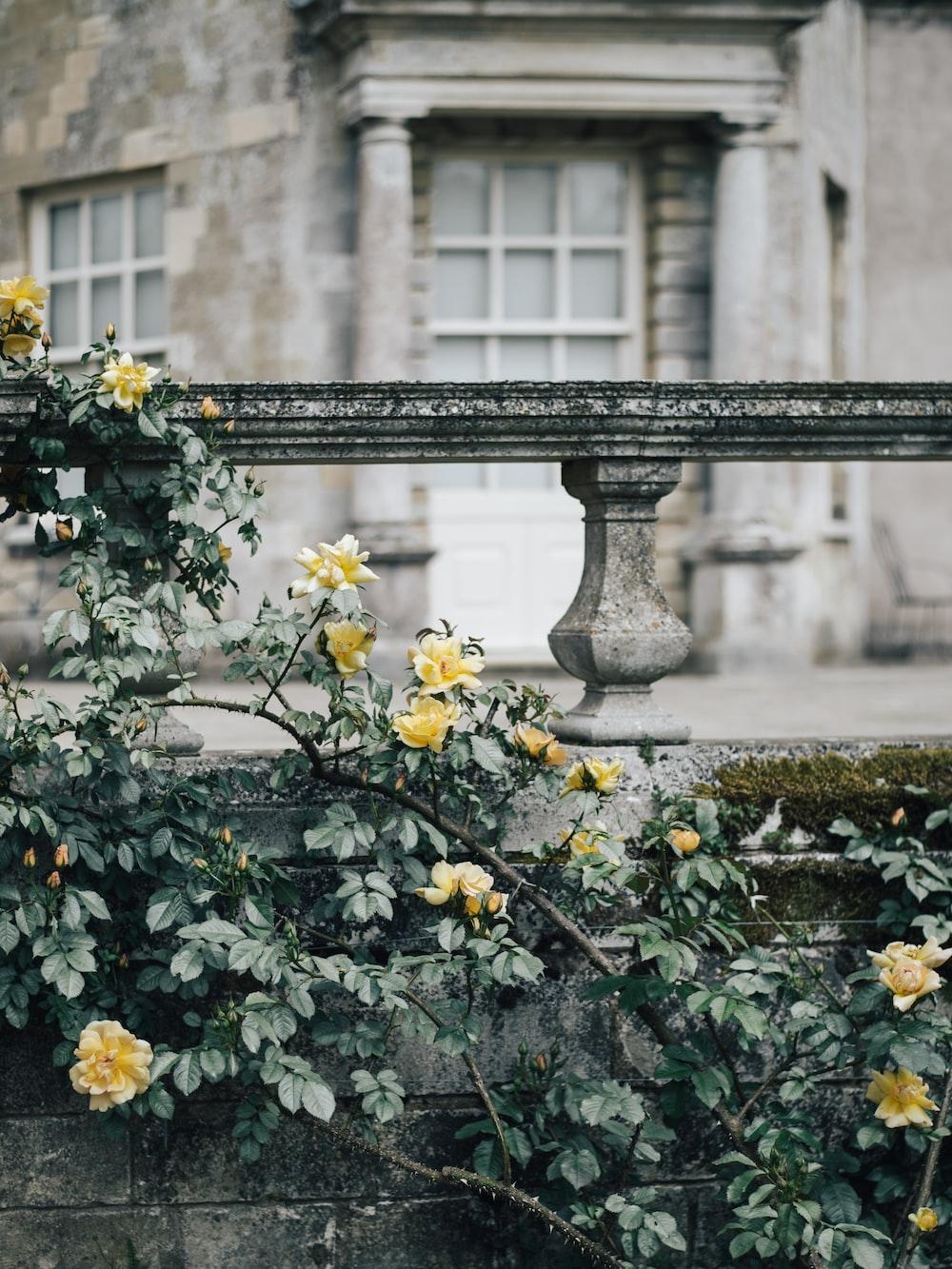 yellow flower near pillars