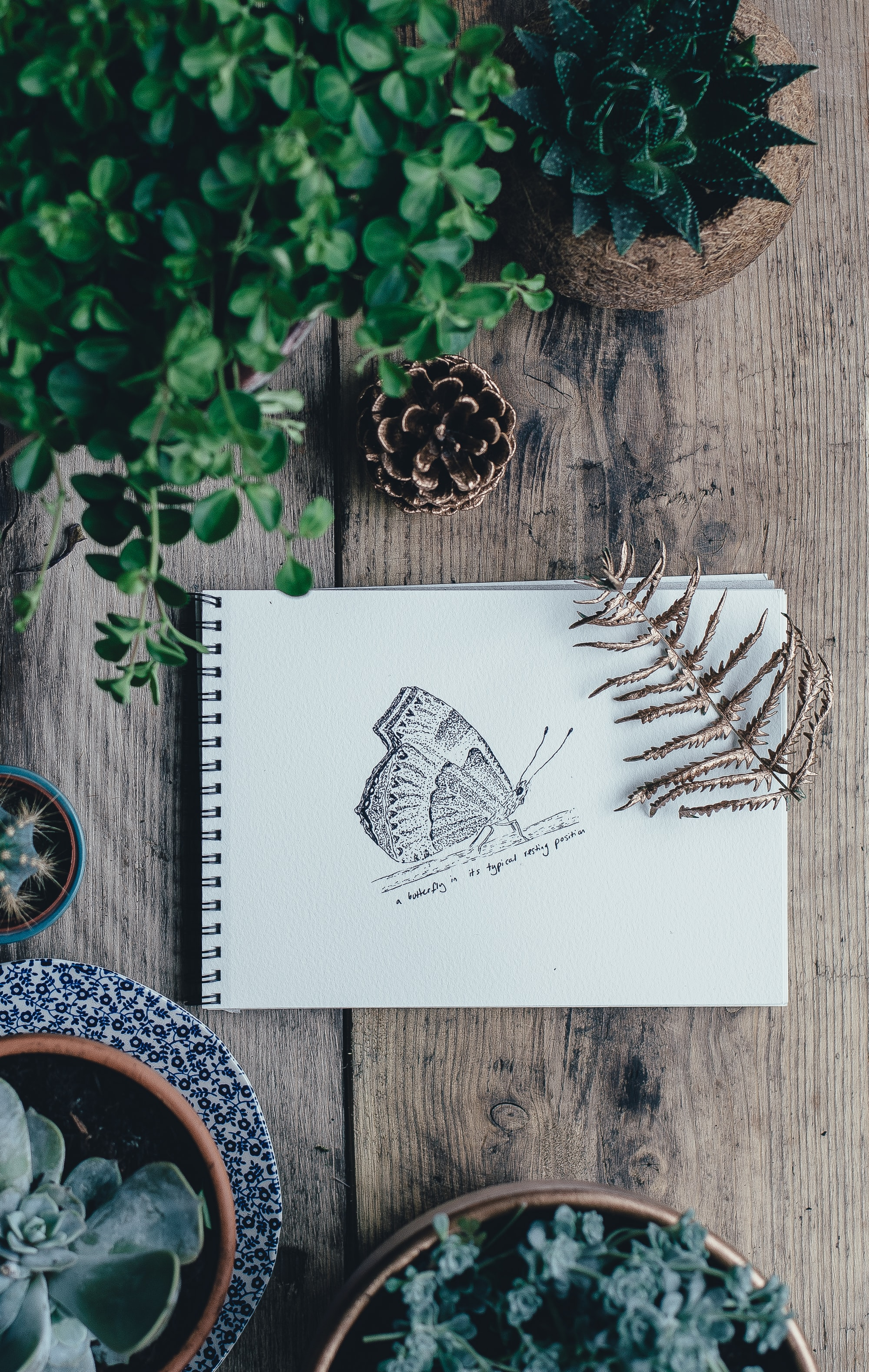 A tabletop with a drawing of a butterfly, plants, and pots
