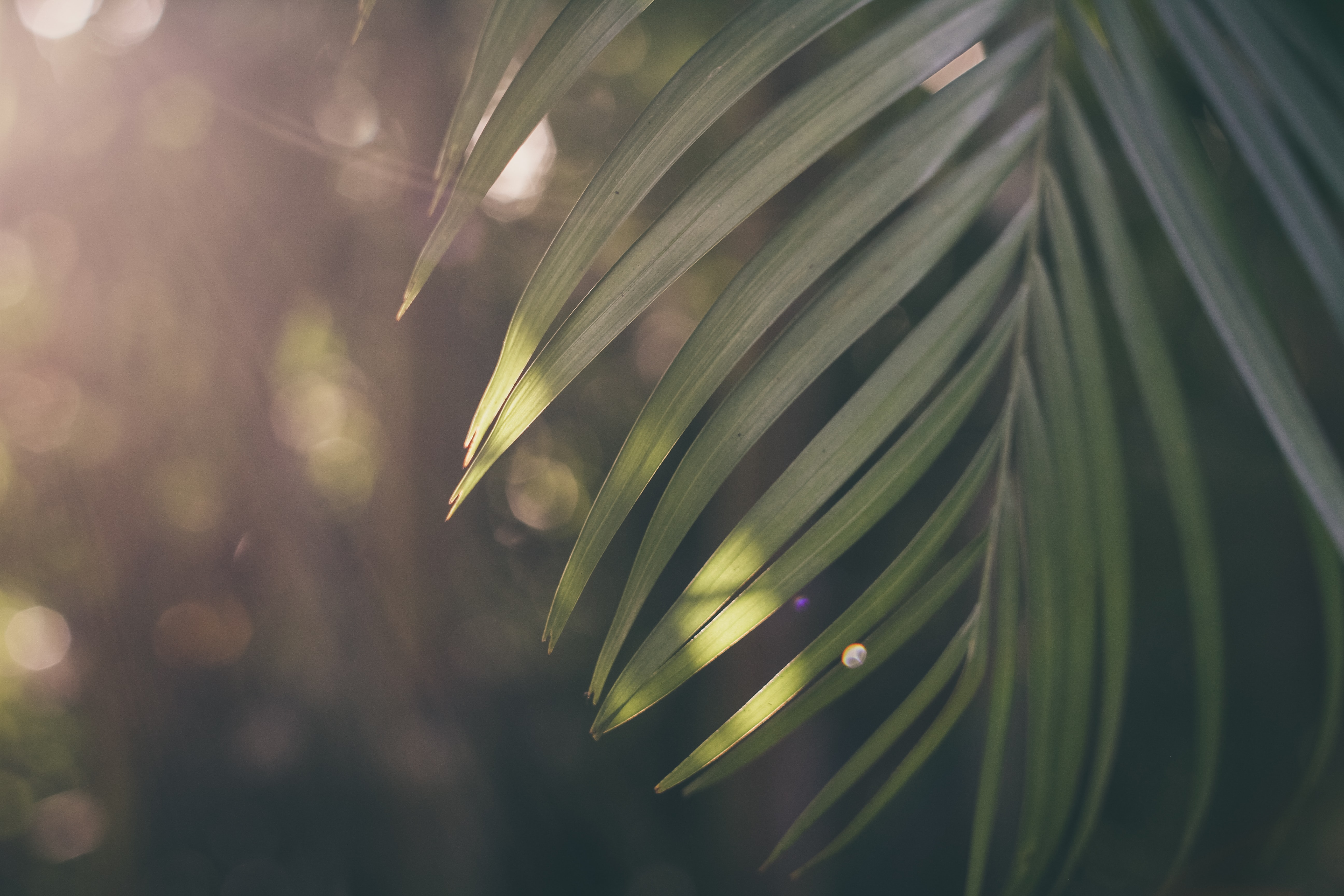 shallow focus photography of palm tree leaf