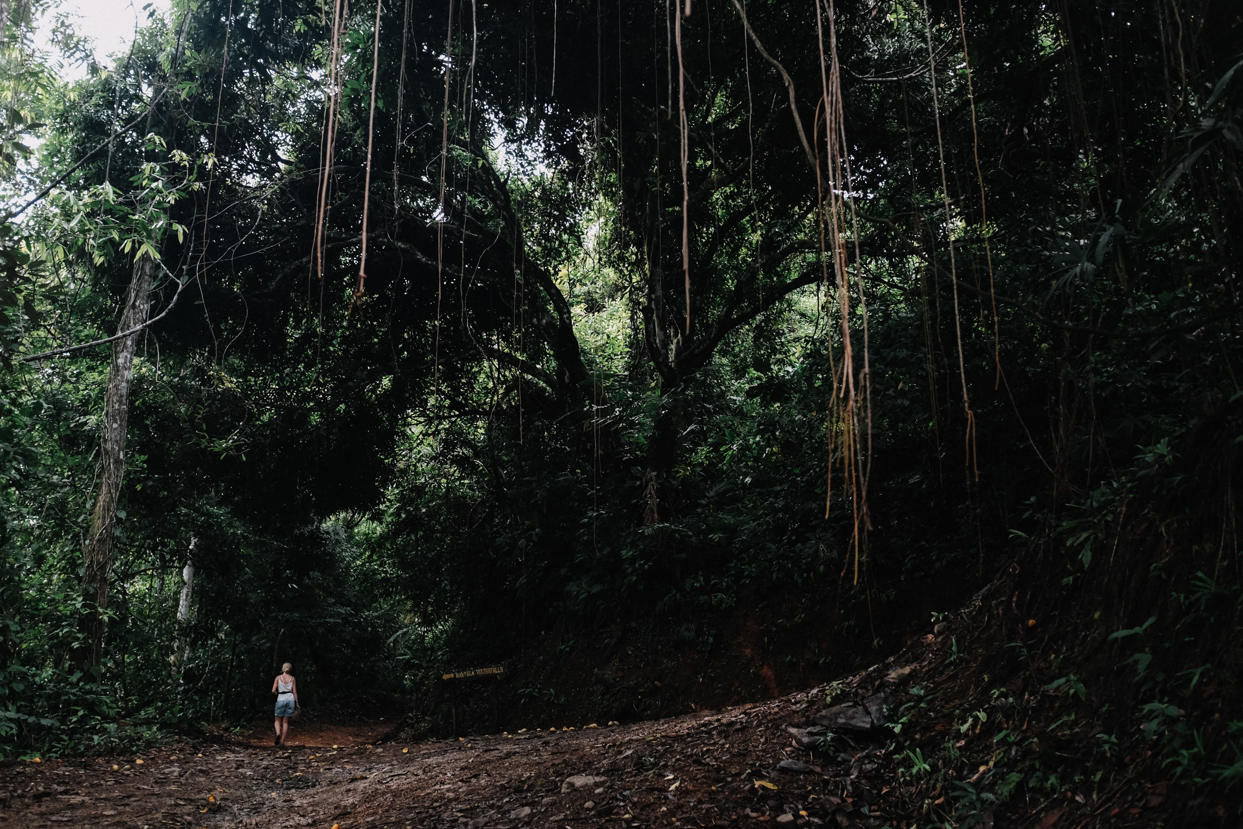 A woman walking through a tropical forest in Costa Rica