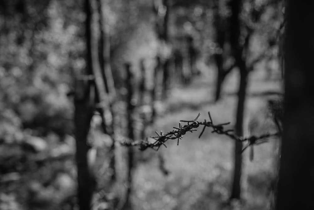 selective focus photography of barbed wire