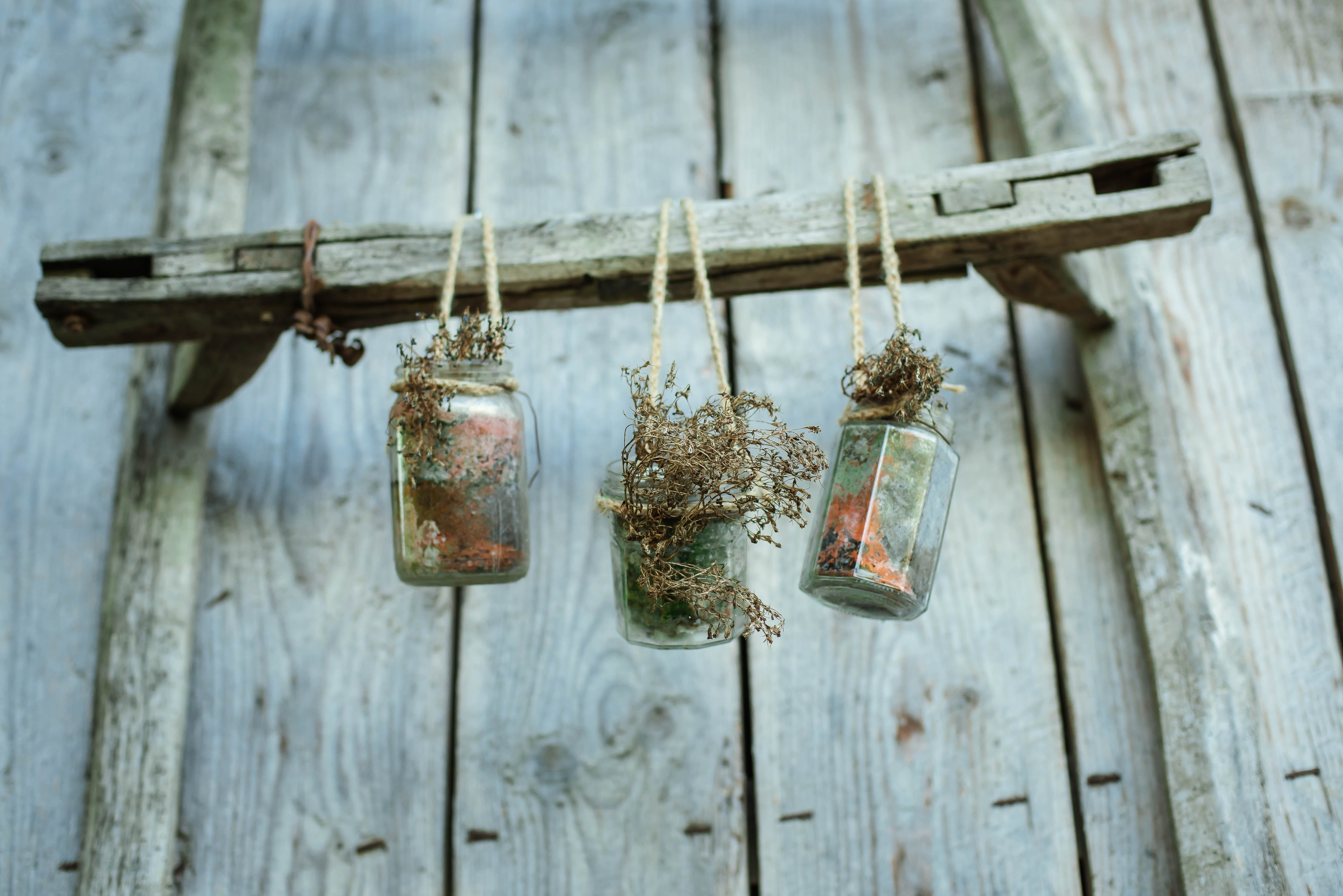 Small plants in glass jars suspended on a wooden wall