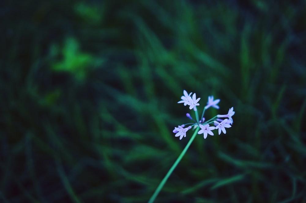 shallow focus photography of purple plants