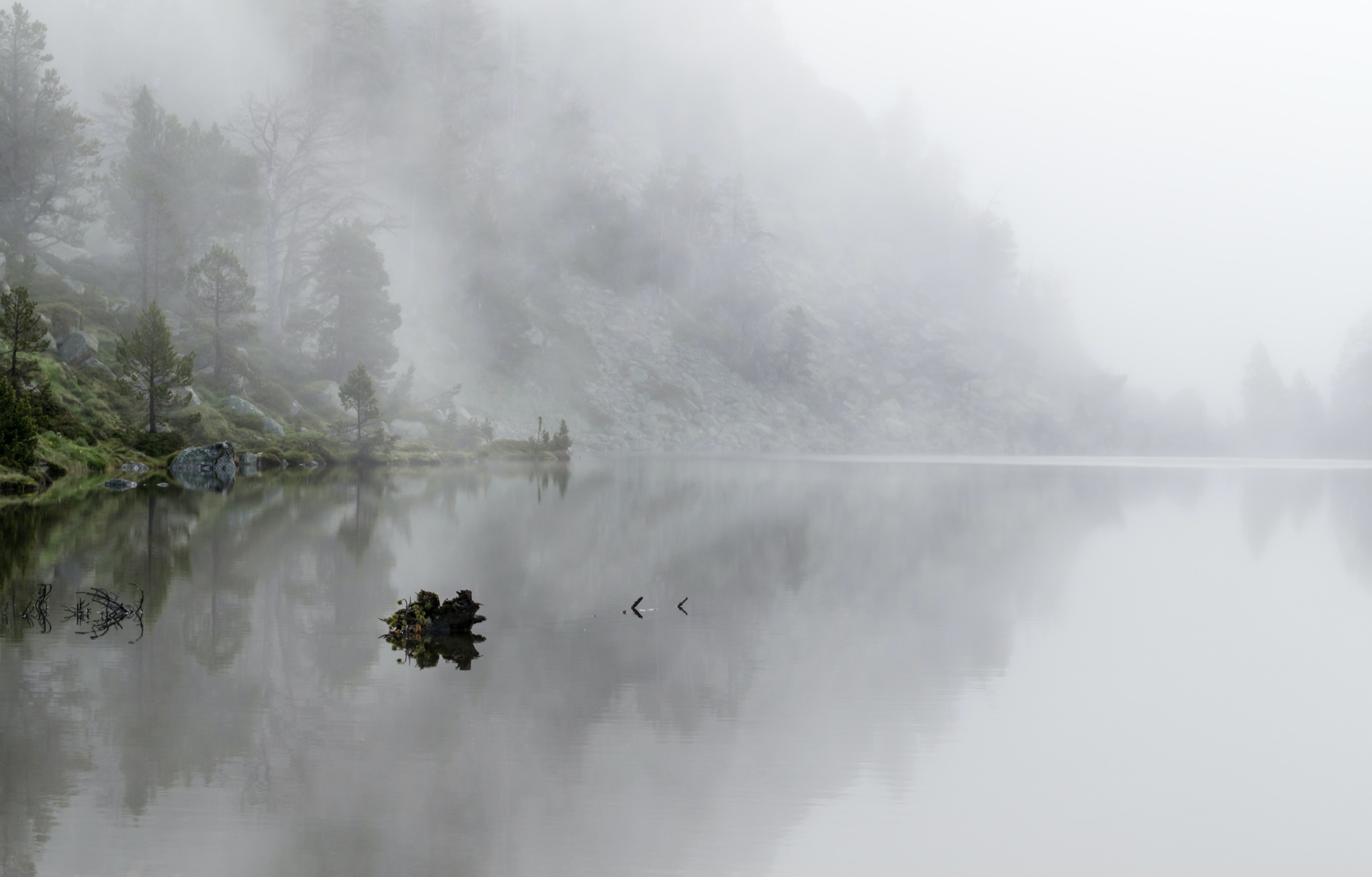 Calm isolated lake near pine on a misty morning in Pic de Néouvielle