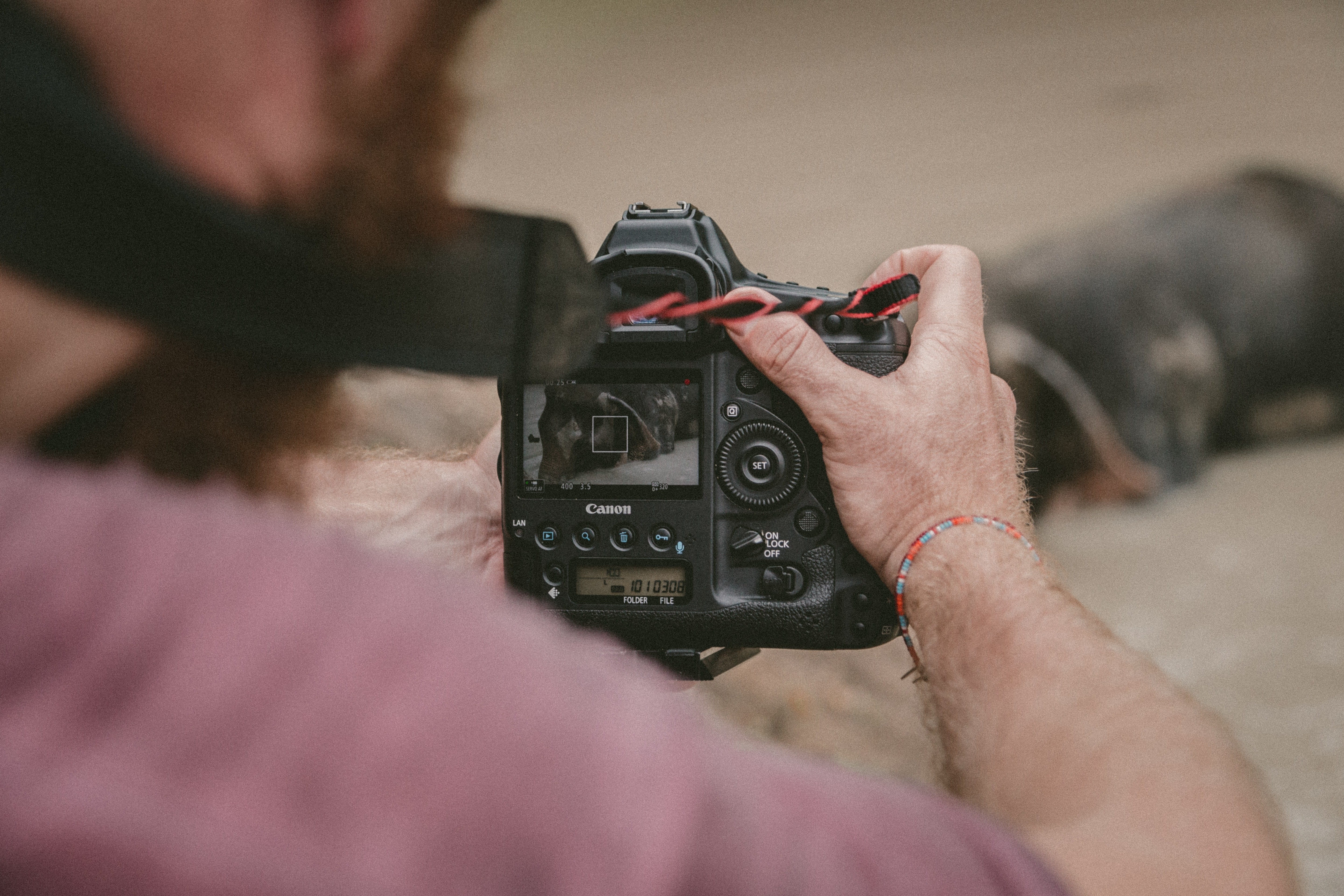 person holding black camera taking photo of animal