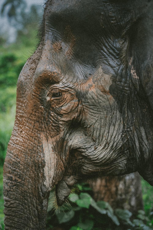 photography of black elephant