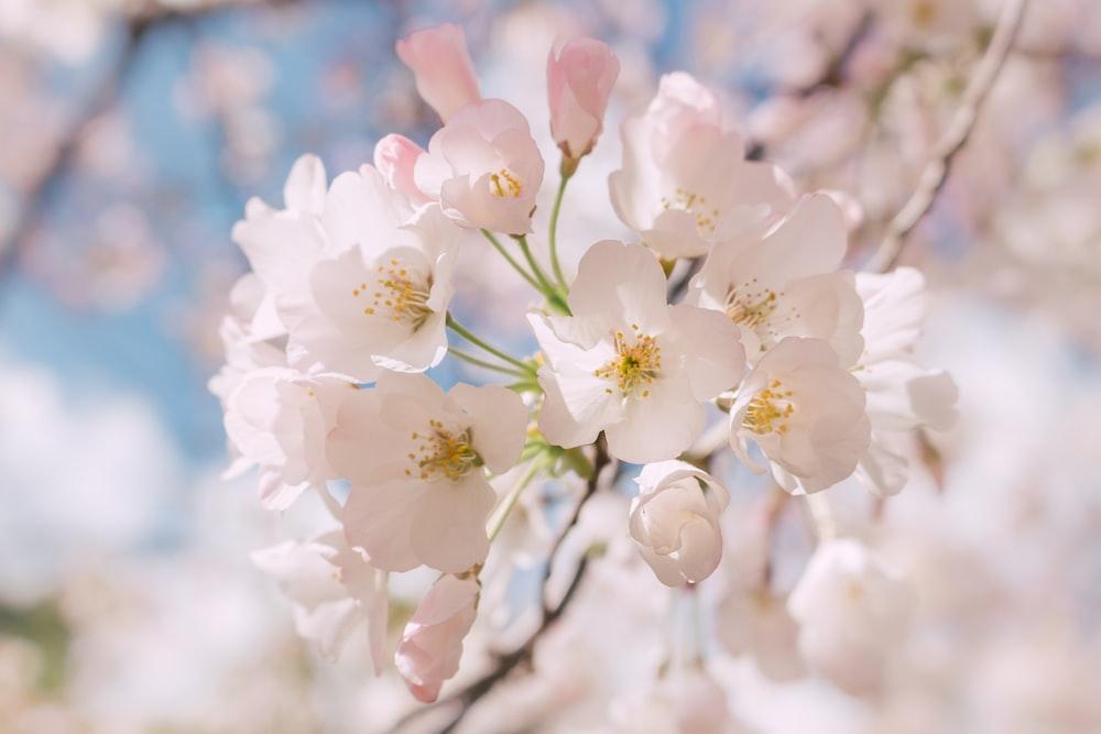 Flowers Photo By Bernard Hermant Bernardhermant On Unsplash