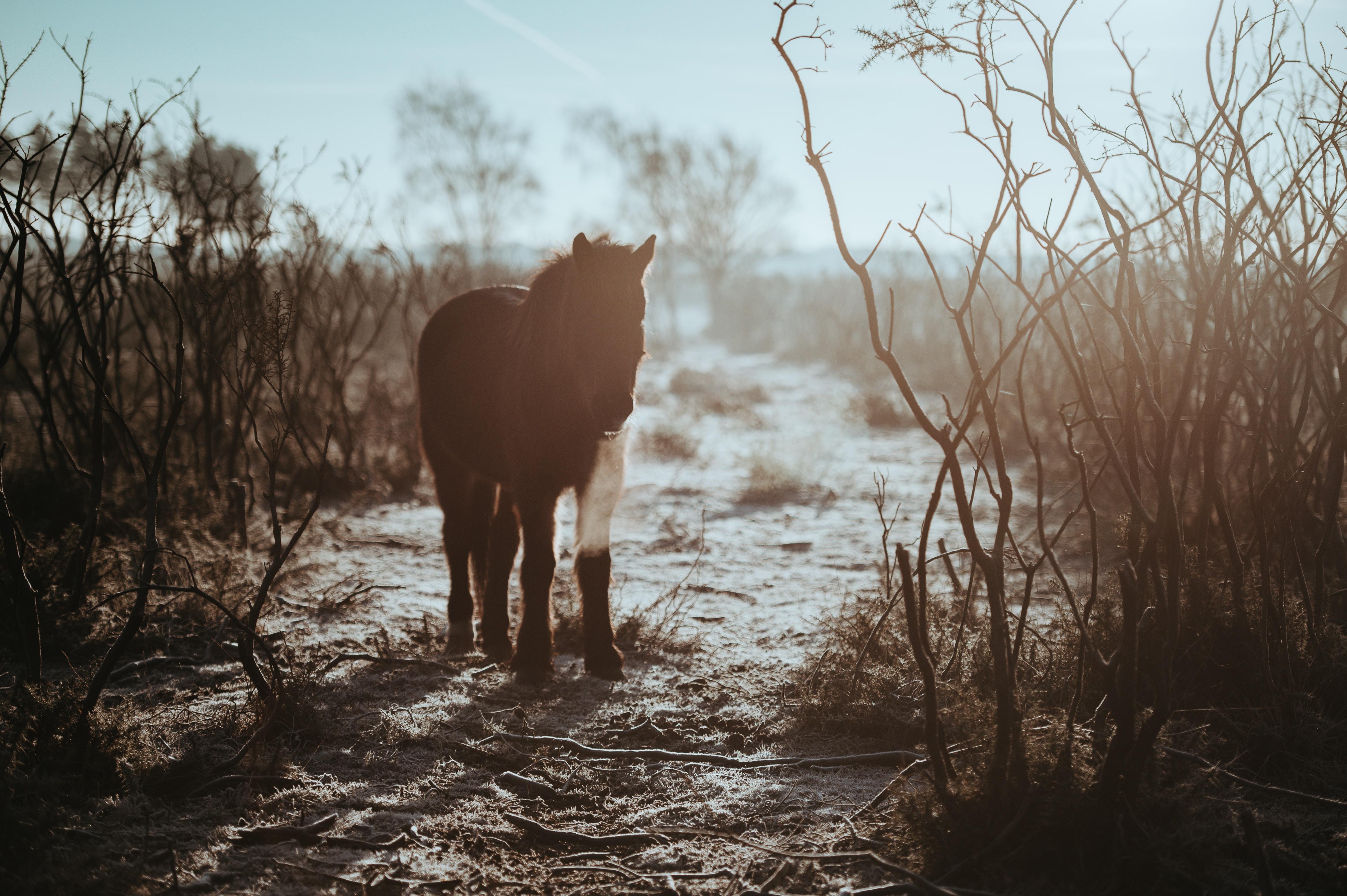 black horse during daytime