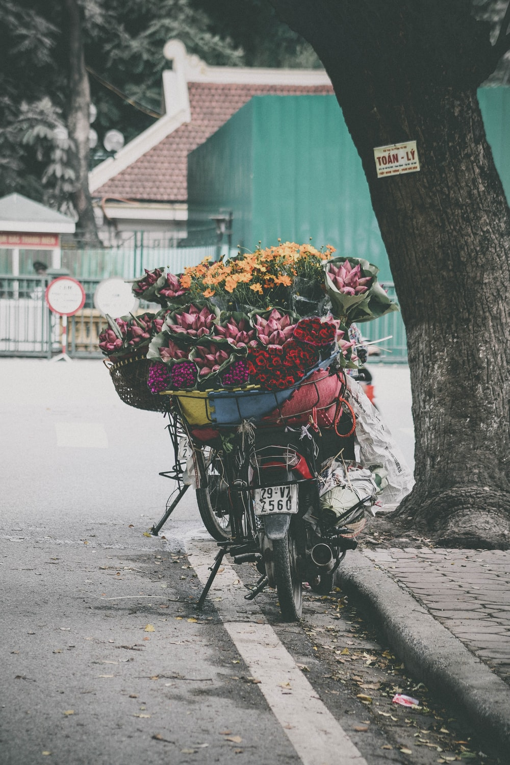 assorted-color petaled flower lot on top motorcycle