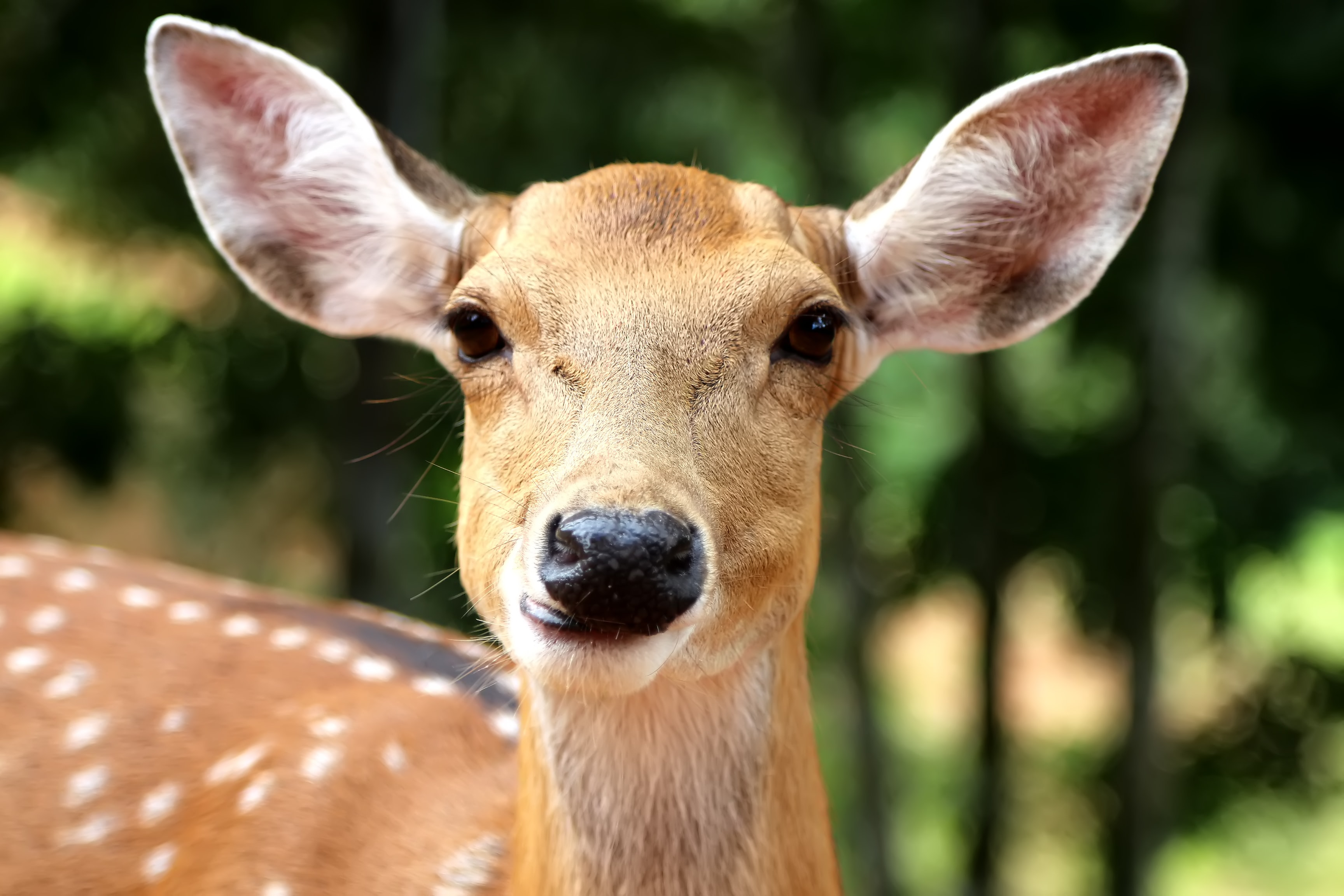 Portrait of a wild young deer in the woods