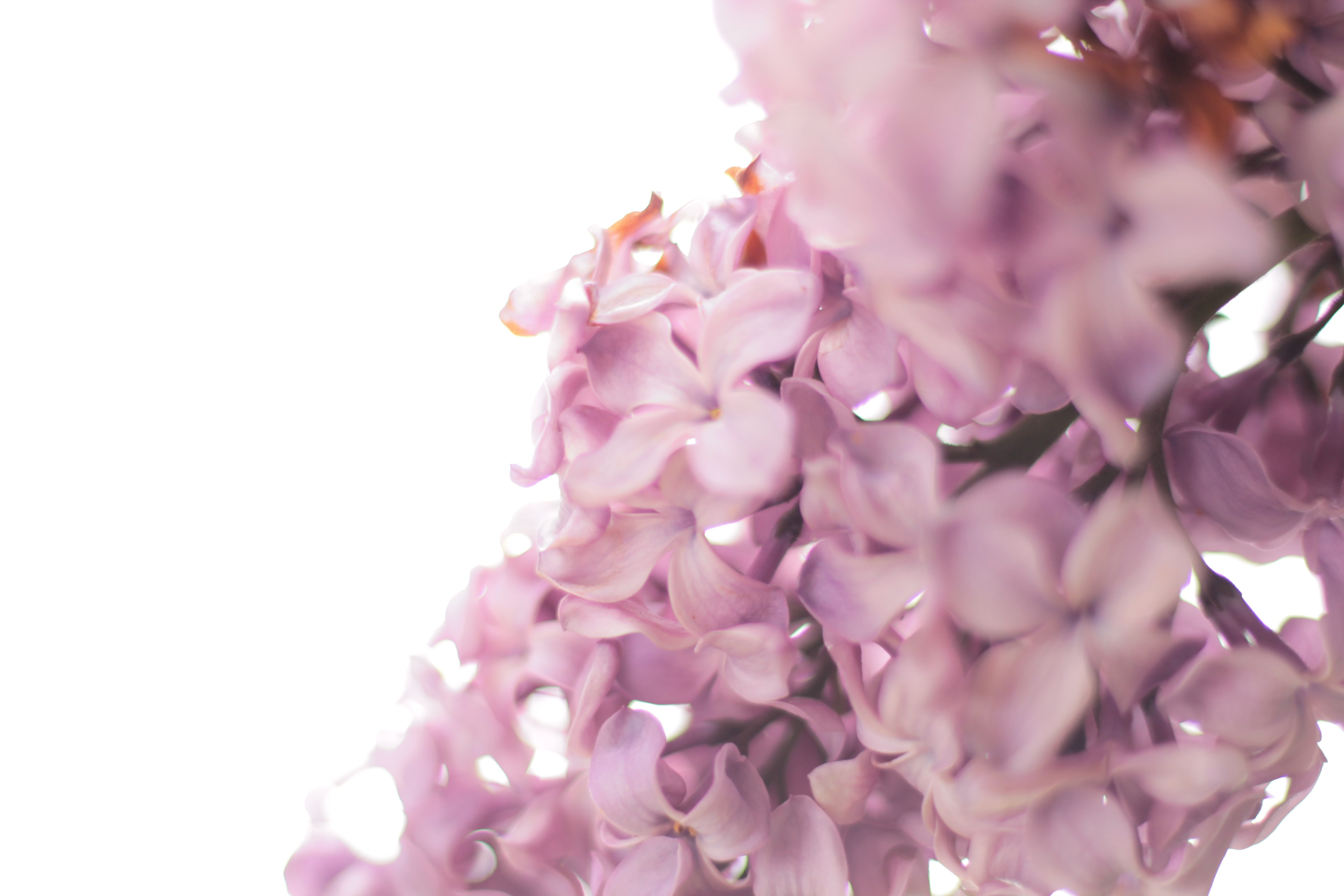 lilacs on monday, a poem break up stories