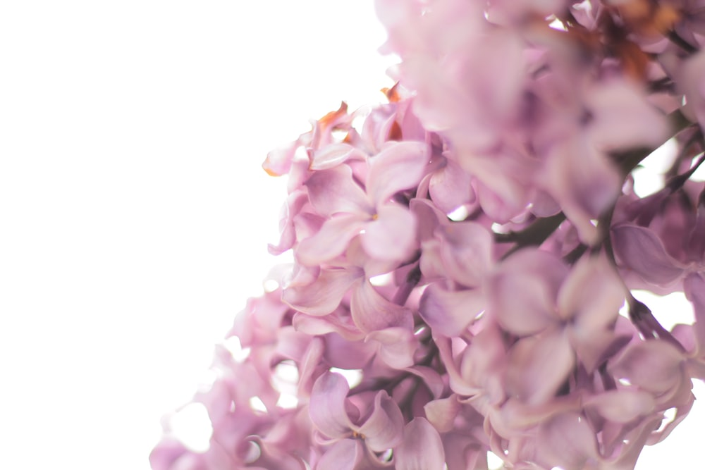 photo of purple flowers