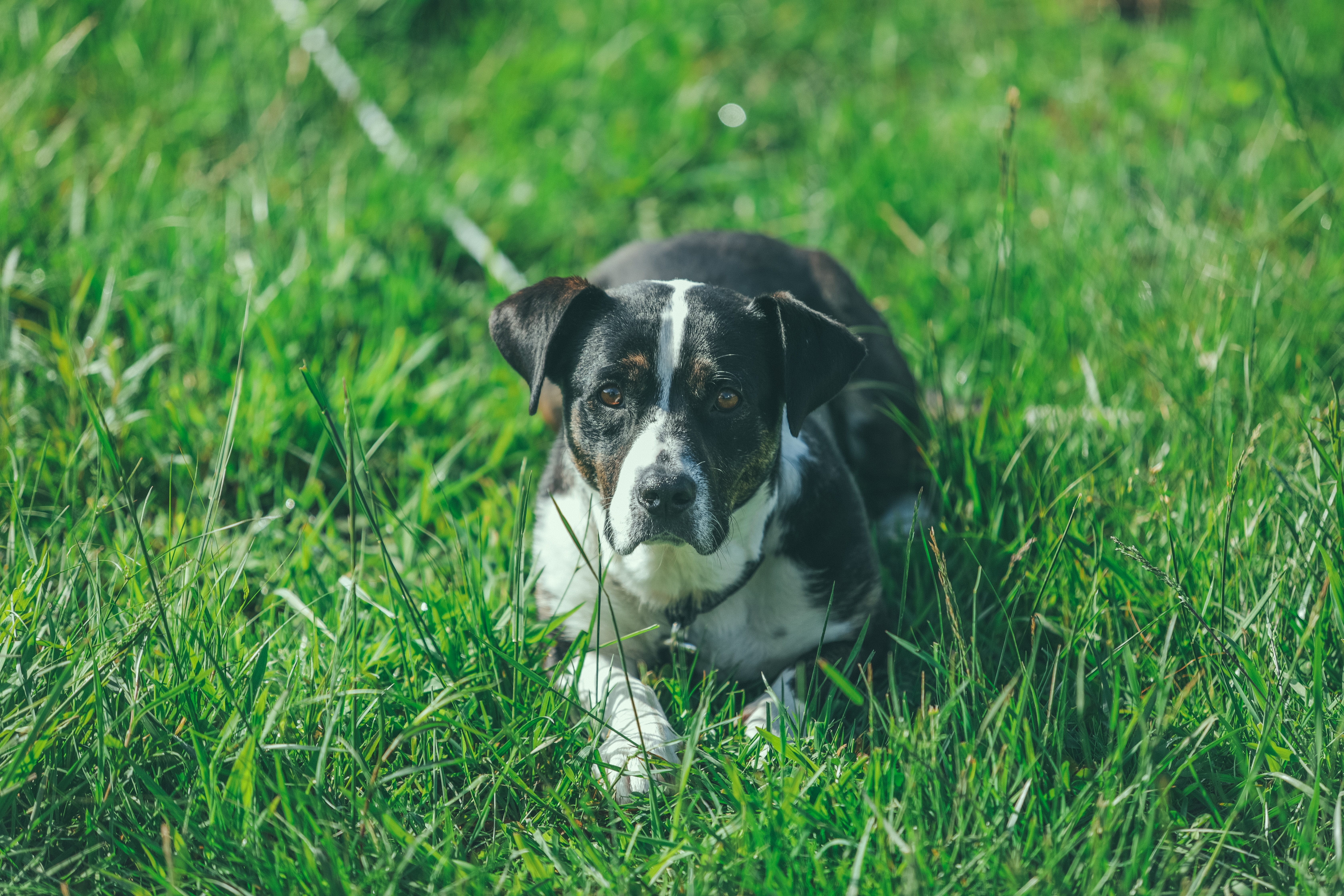 white and black dog on green grass