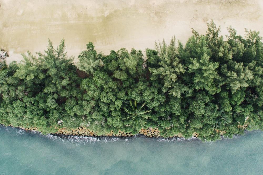 birds eye view of trees beside river