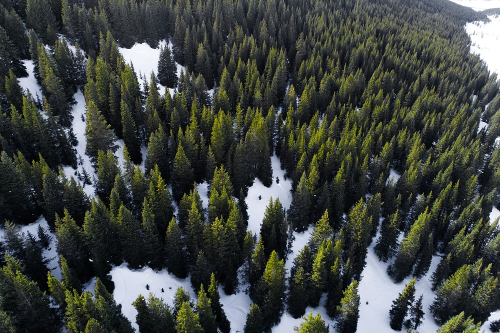 aerial view of forest during day time