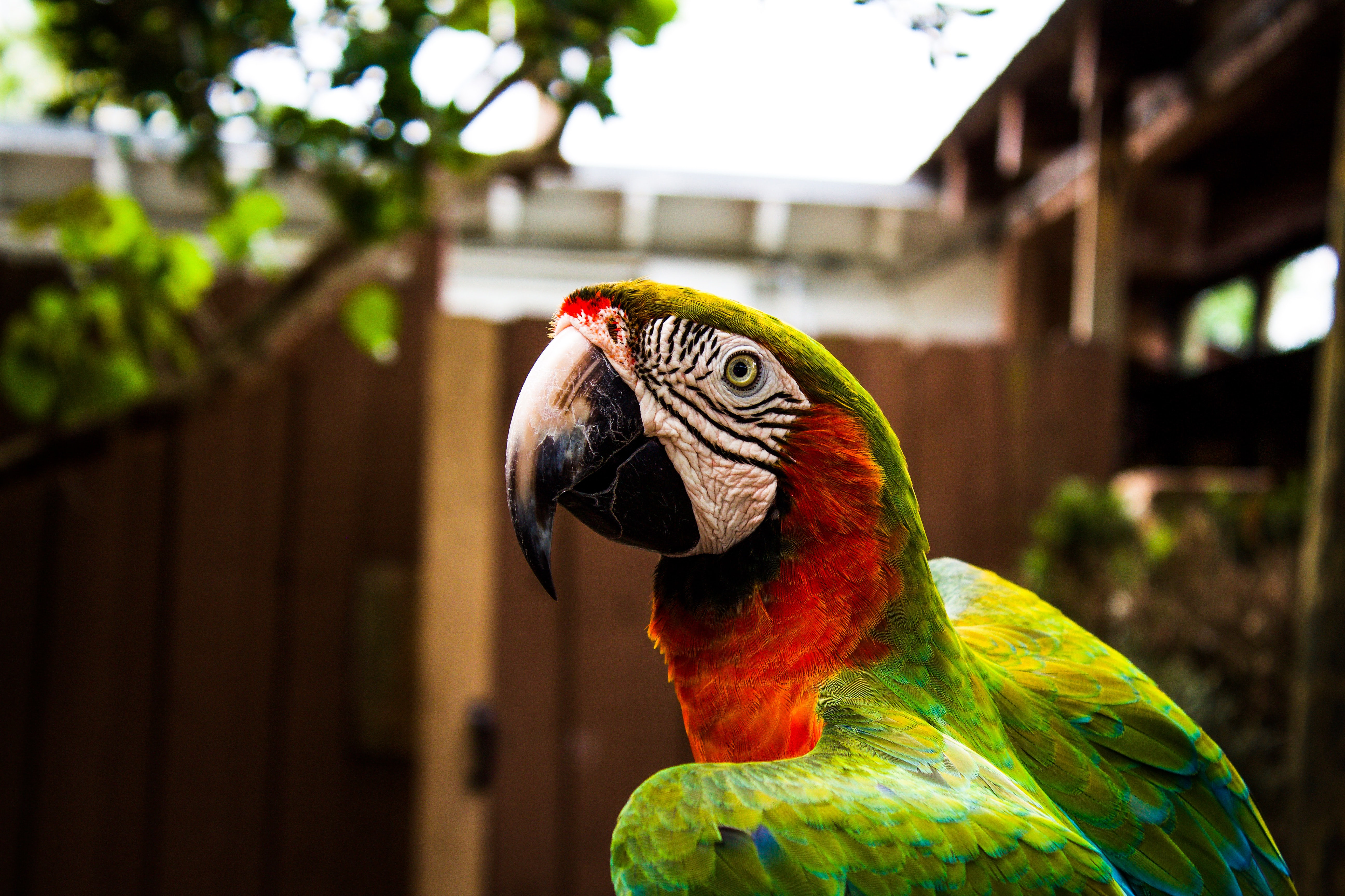 A green and red parrot beside a fence and tree