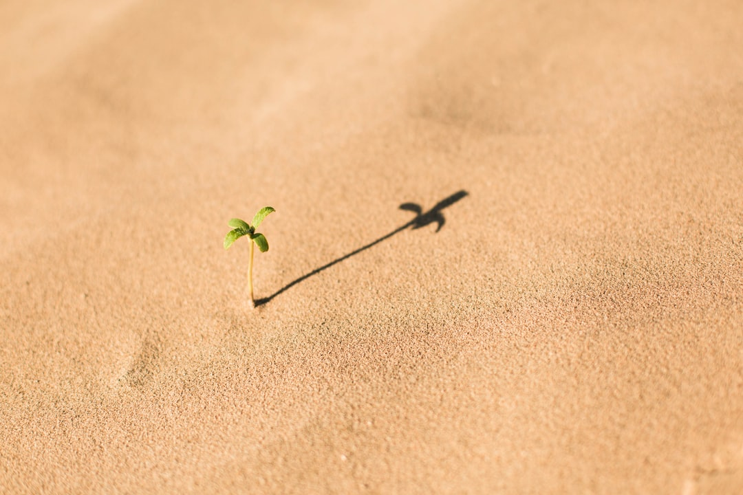 A tiny sprout growing in fine sand casting long shadow
