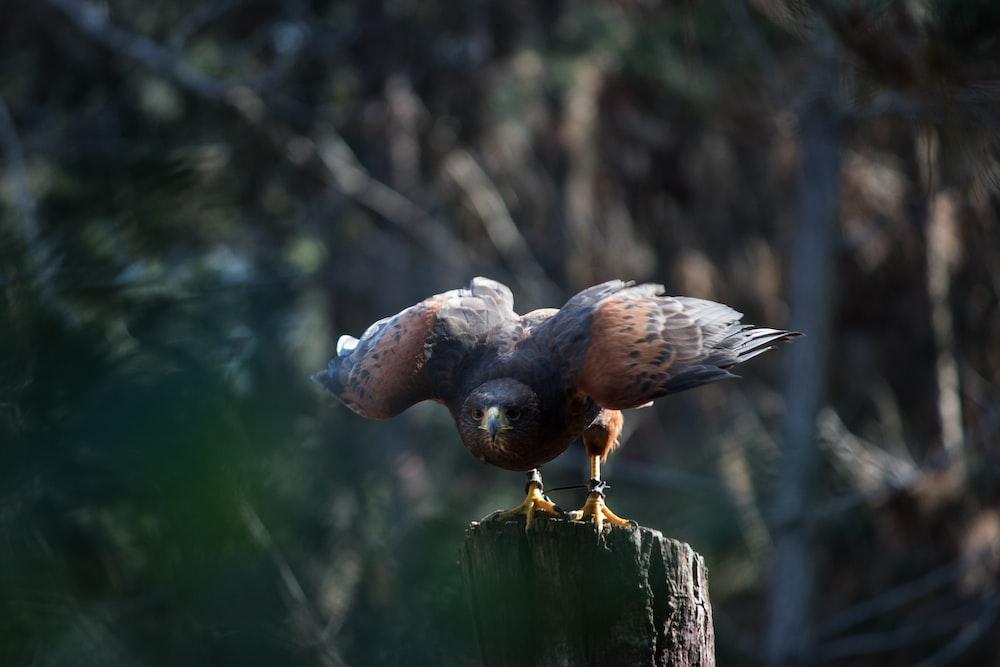 brown and black bird during daytime