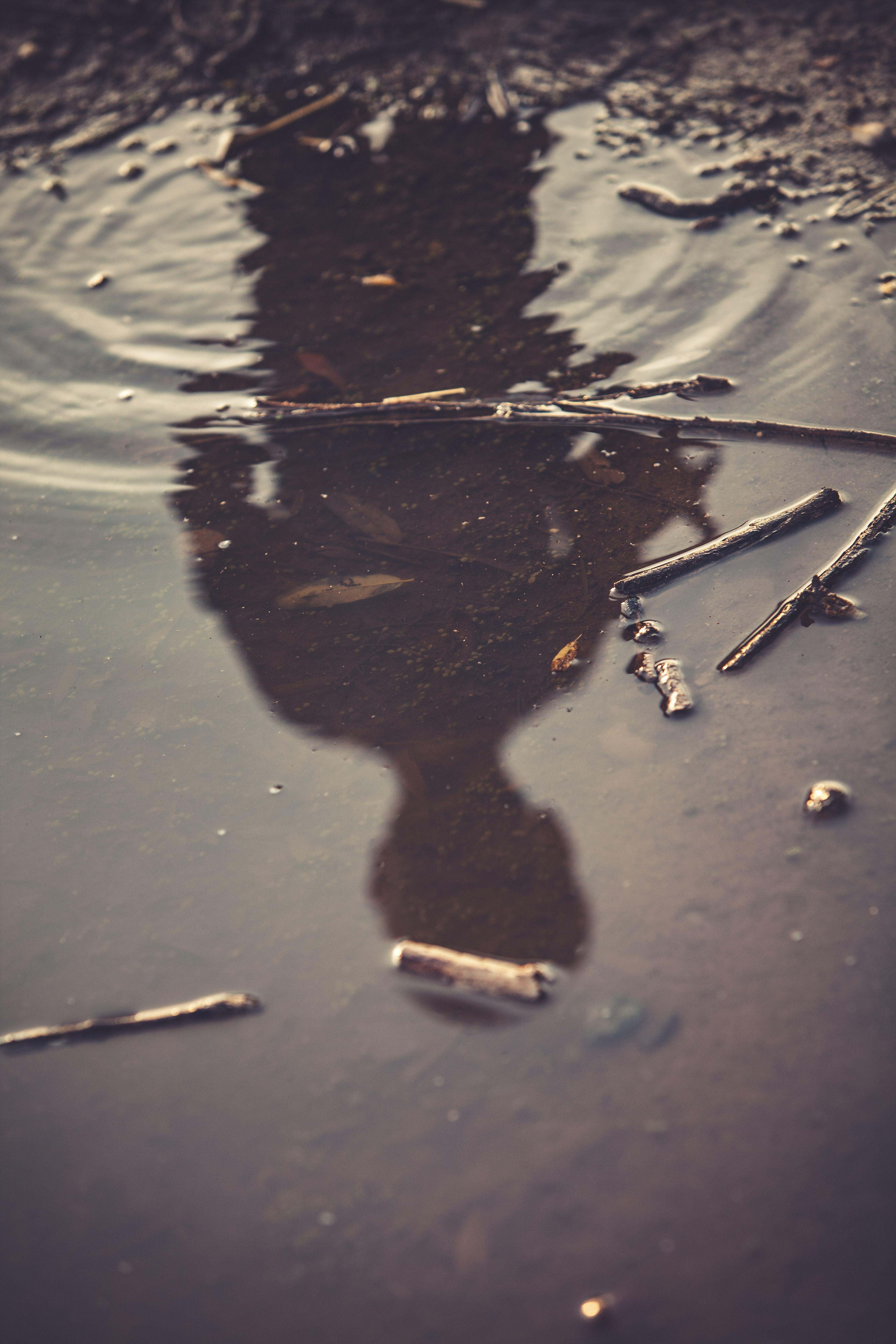 A reflection showing a person's shadow in a stick covered pond