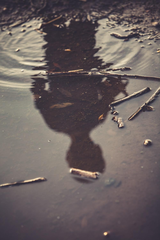 sticks on body of water