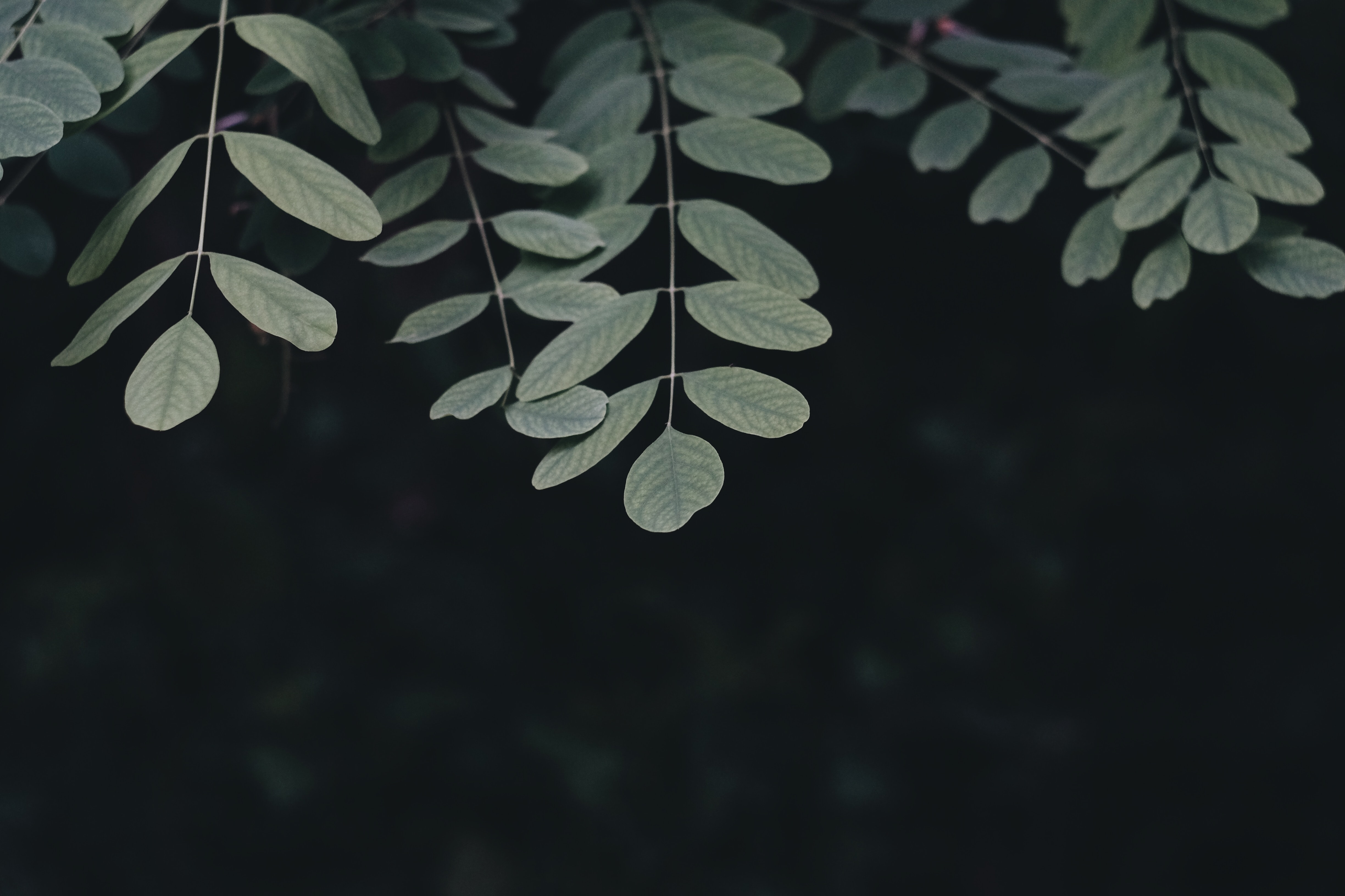 green leafed plant in closeup shot